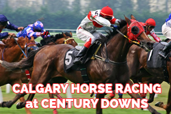 Calgary Horse Racing Century Downs